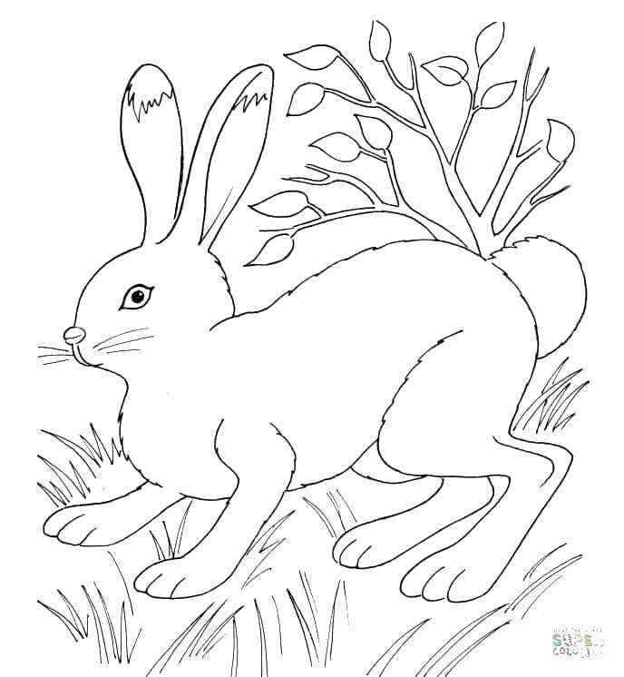 Раскраски зайцы  Зайка