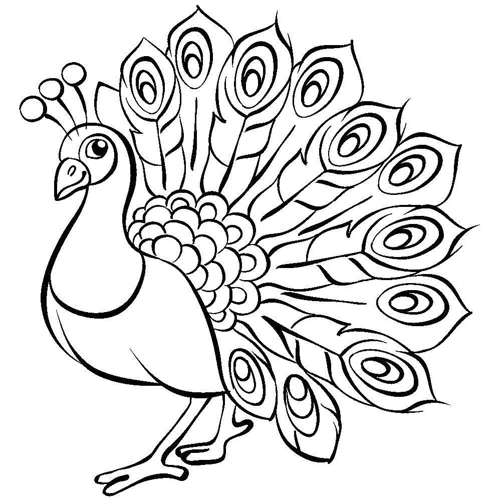Раскраски домашние птицы павлин, птицы зоопарка павлины  Красивый павлин