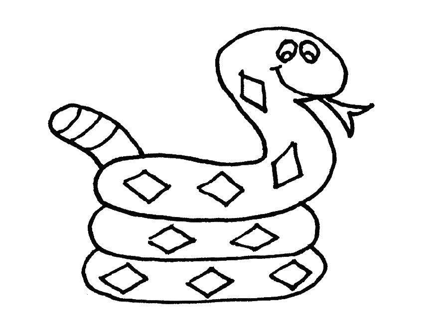 Раскраски змея  Змея