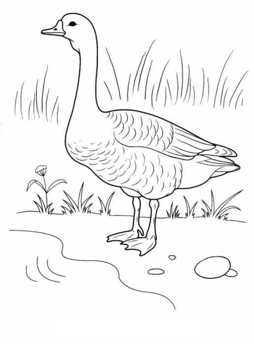 Раскраска с гусями  Гусь на полянке у реки