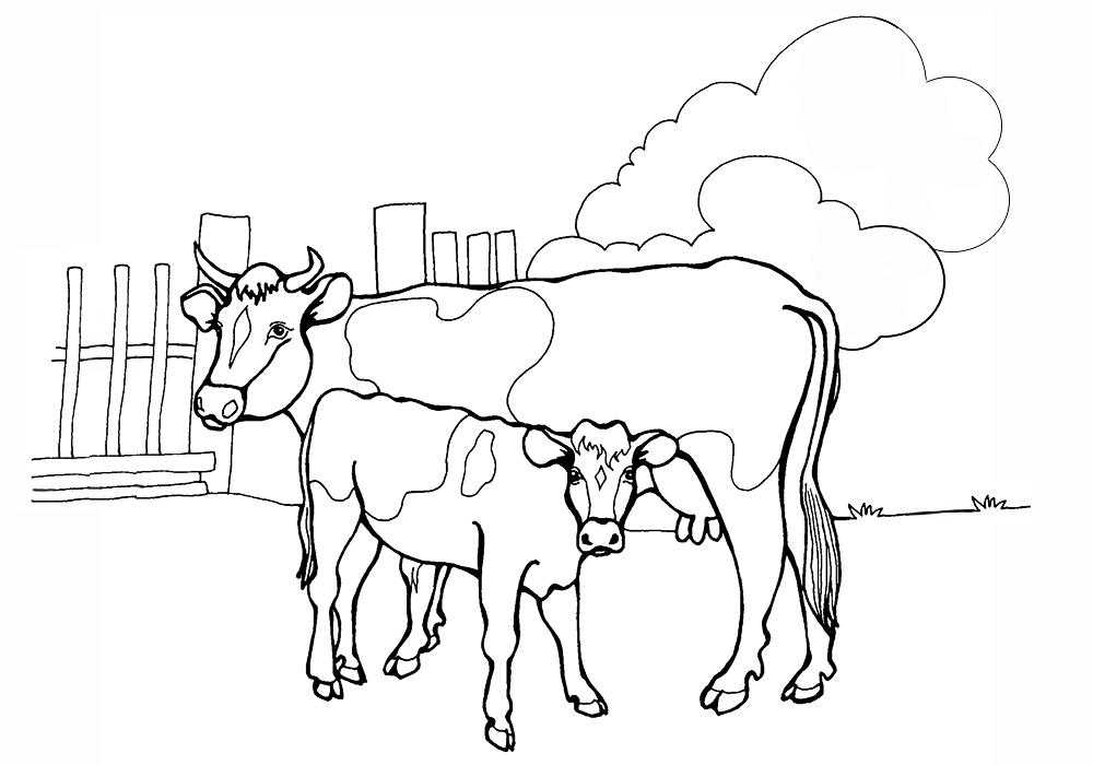 Раскраски домашняя корова