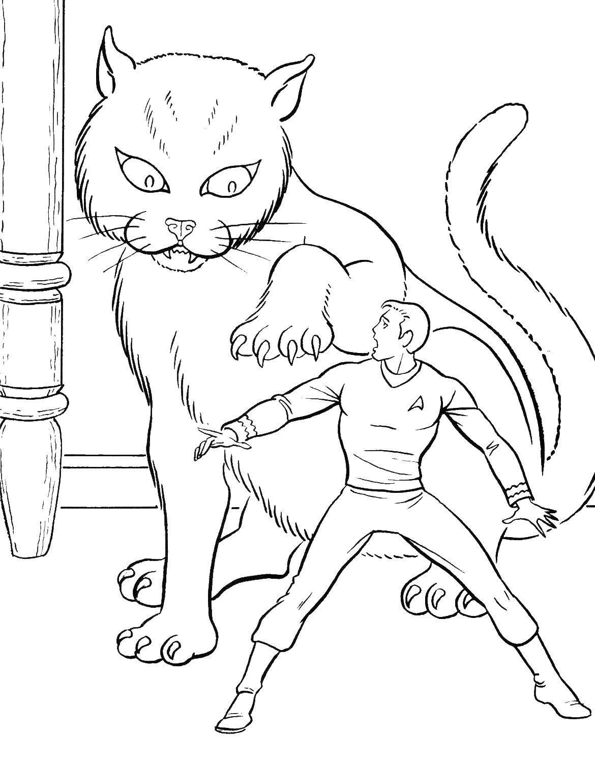 Большой кот напал на человека