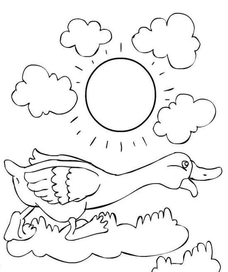 Раскраска с гусями  Гусь на полянке в солнечный день