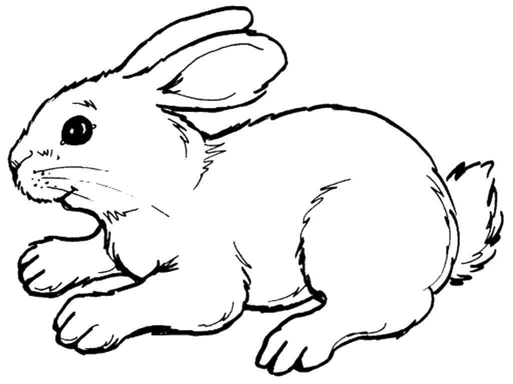 Раскраски зайчата и зайцы  Зайчишка