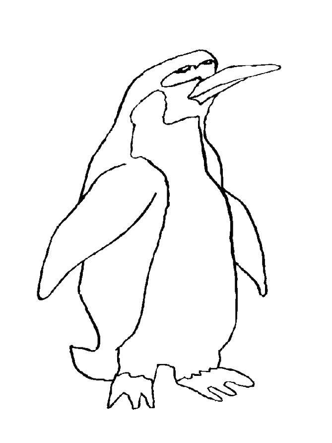 Раскраска с пингвинами  Пингвинчик