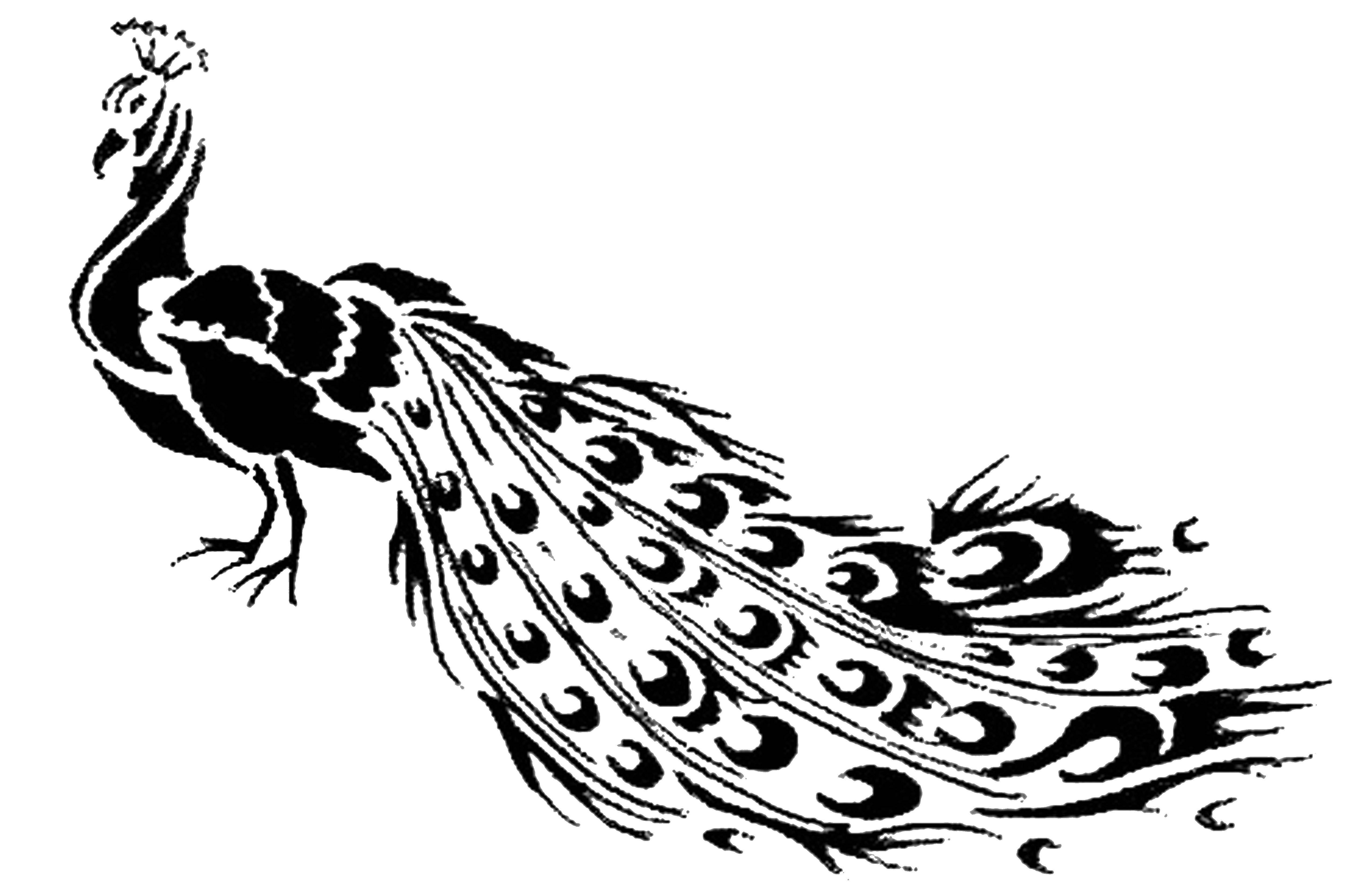 Раскраски домашние птицы павлин, птицы зоопарка павлины  Павлин с длинным хвостом