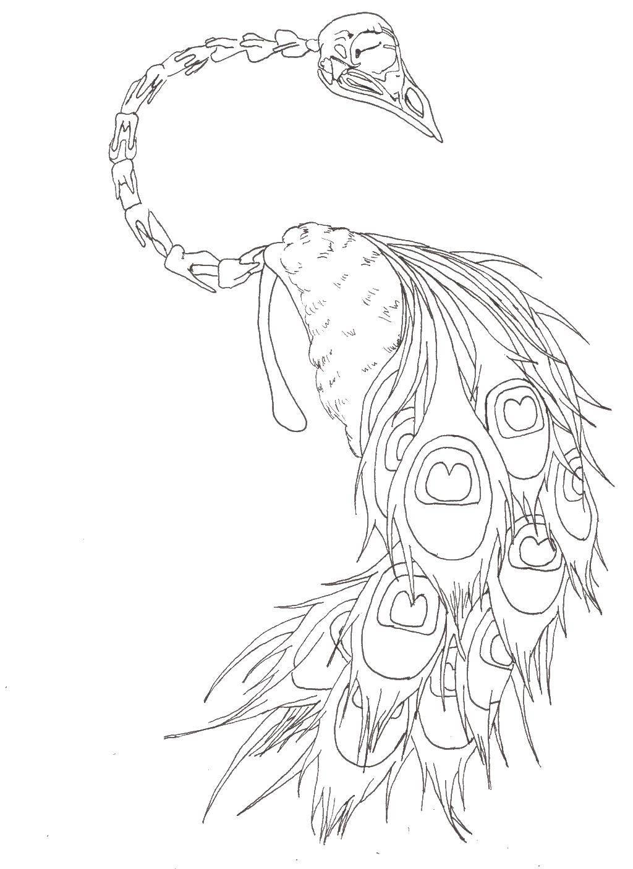 Раскраски домашние птицы павлин, птицы зоопарка павлины  Скелет павлина