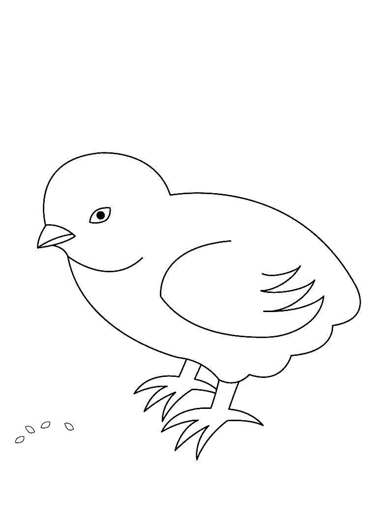 Цыпленок клюет зерна