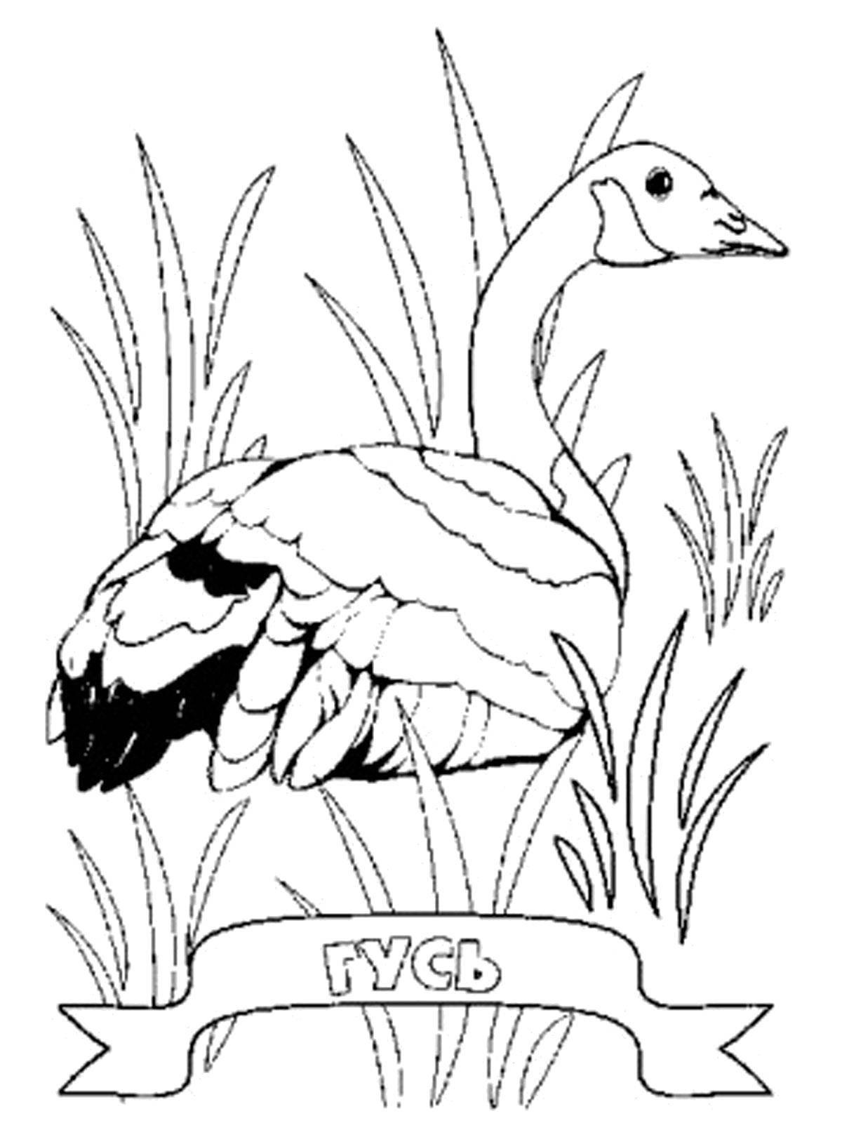 Раскраска с гусями  Гусь в траве