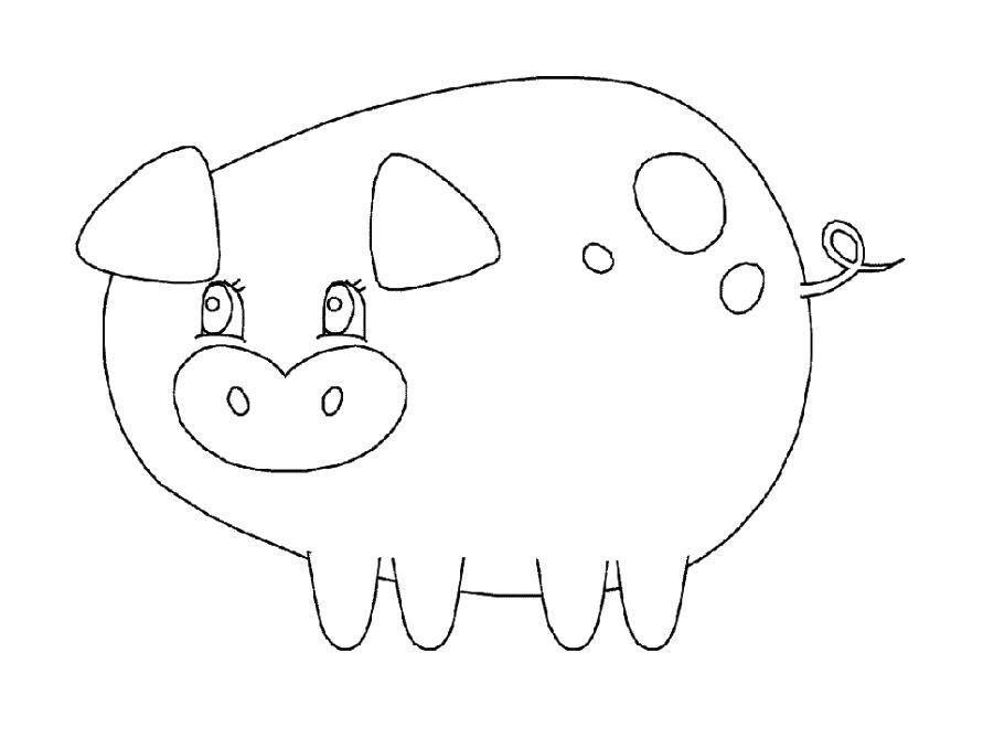 Круглая свинка