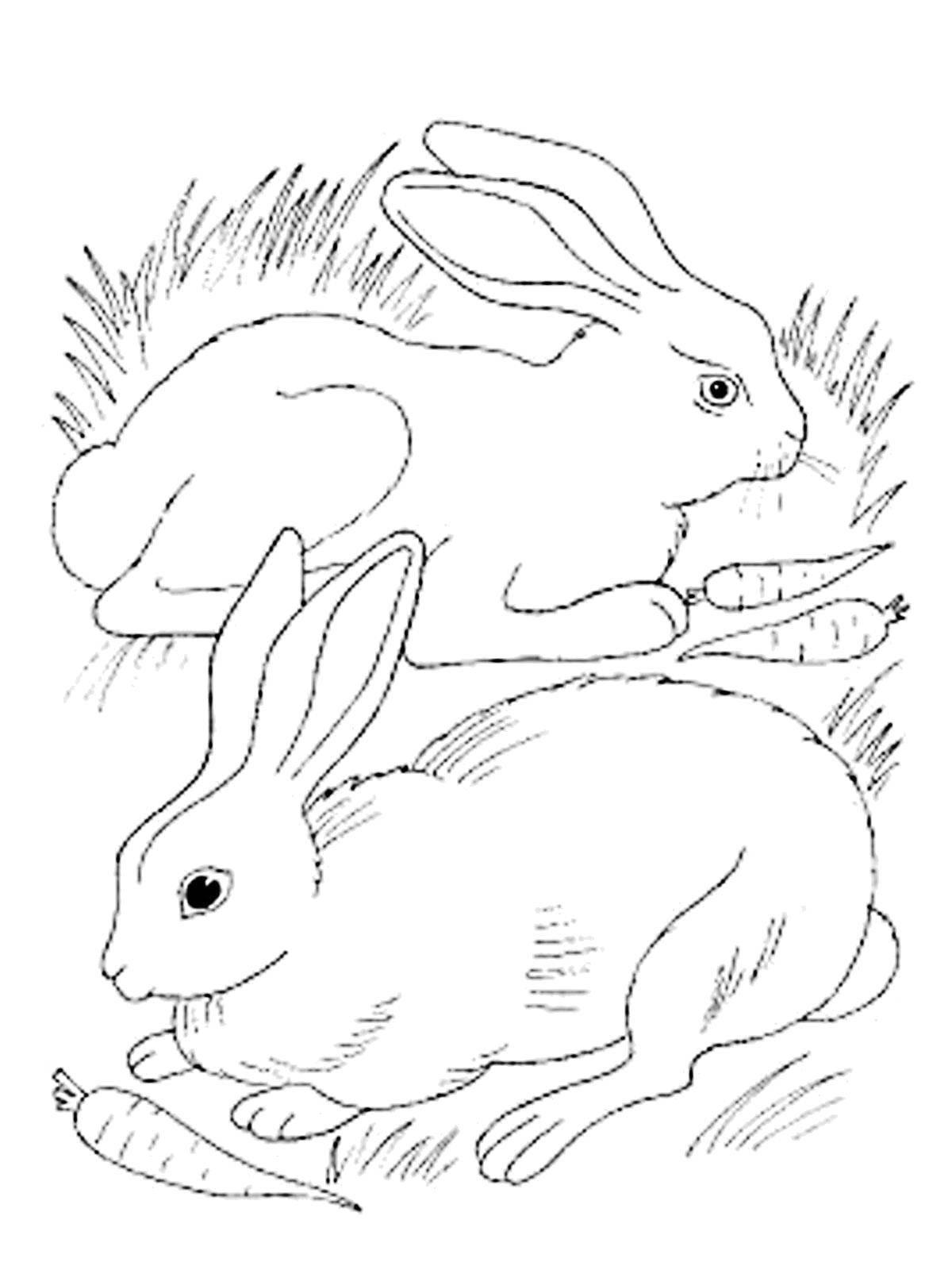 Раскраски зайчата и зайцы  Зайчики с морковчкой