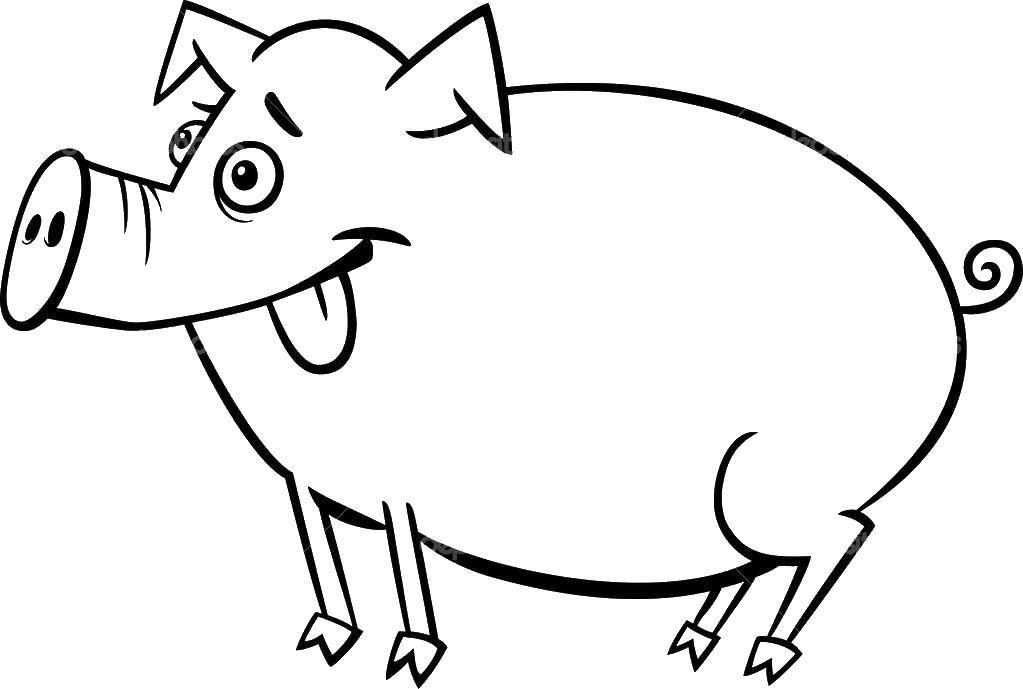 Глупая свинка