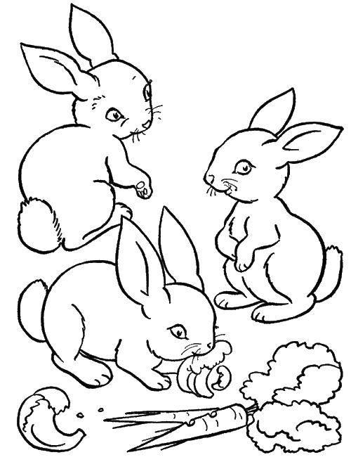 Раскраски зайчата и зайцы  Зайчики едят морковку