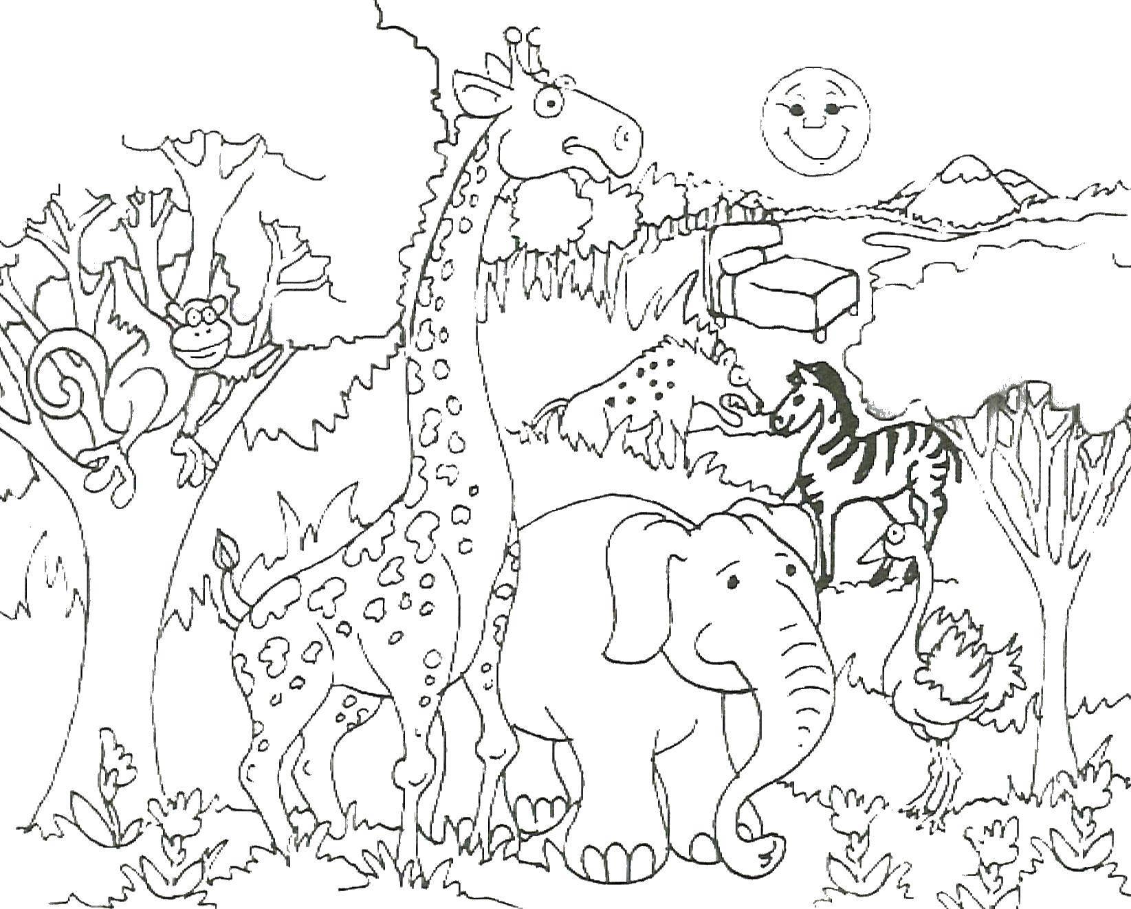 Слон, жираф, страус, обезьяна, зебра