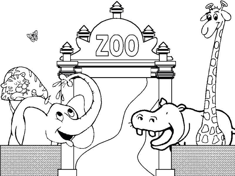 Слон, тигр, бегемот и жираф в зоопарке