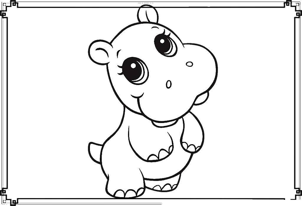 Раскраски бегемоты и гиппопотамы   Маленький бегемотик