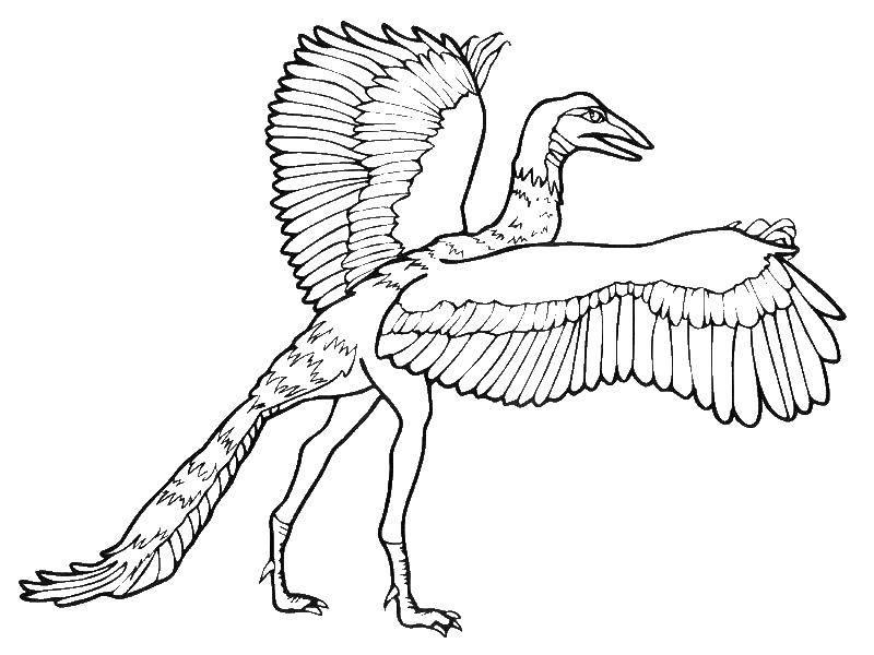 Археоптерикс - потомок современных птиц