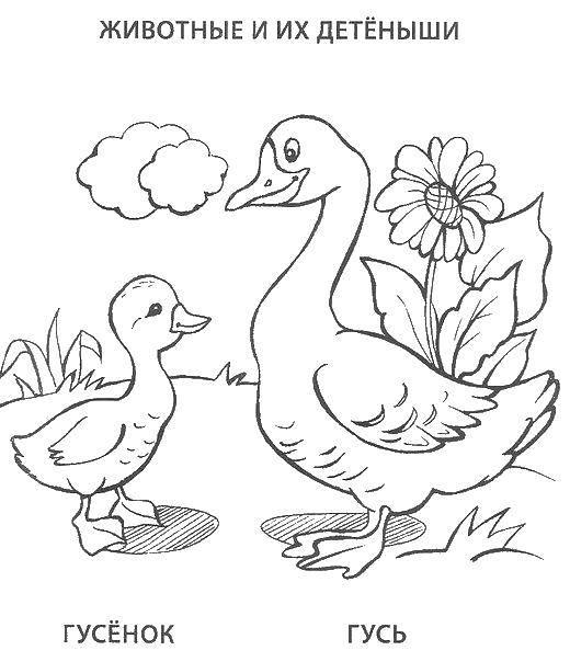 Раскраска с гусями  Гусь и гусенок