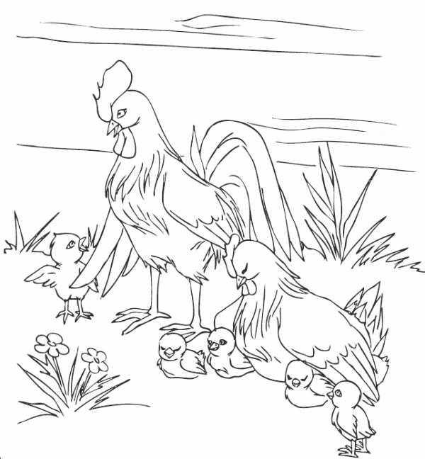 Рисунок петух и семья