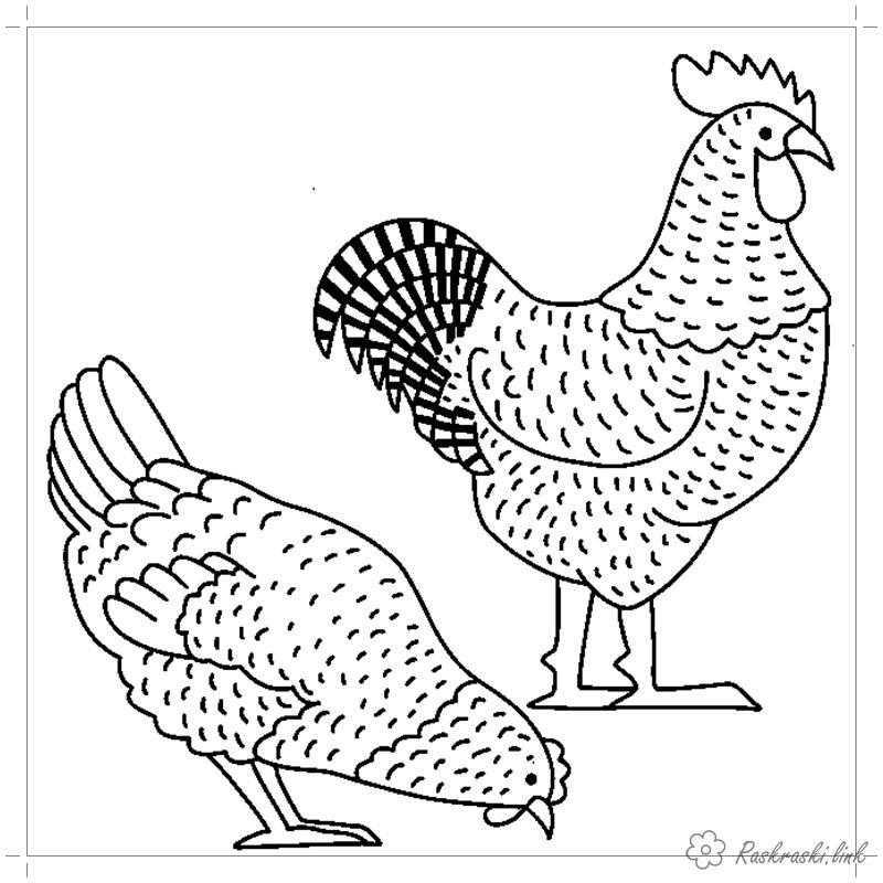 Рисунок петуха с курицой