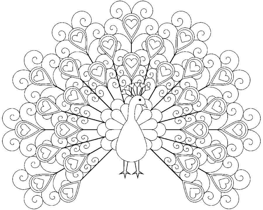 Раскраски домашние птицы павлин, птицы зоопарка павлины  Павлин с сердечками