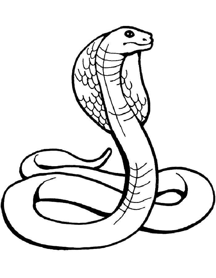 Раскраски змея  Кобра раздвигают грудные рёбра, образуя подобие капюшона
