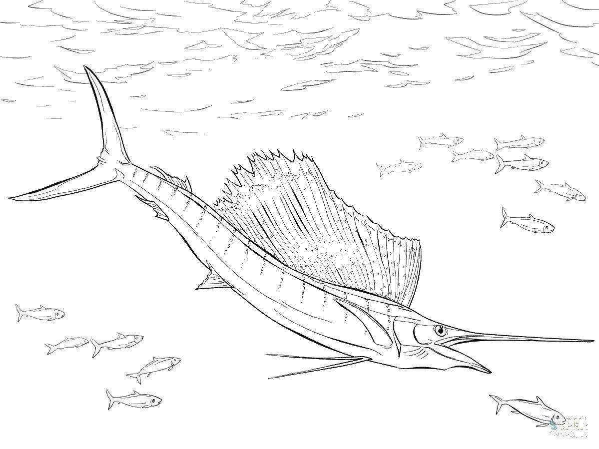 меч  Рыба меч и рыбки