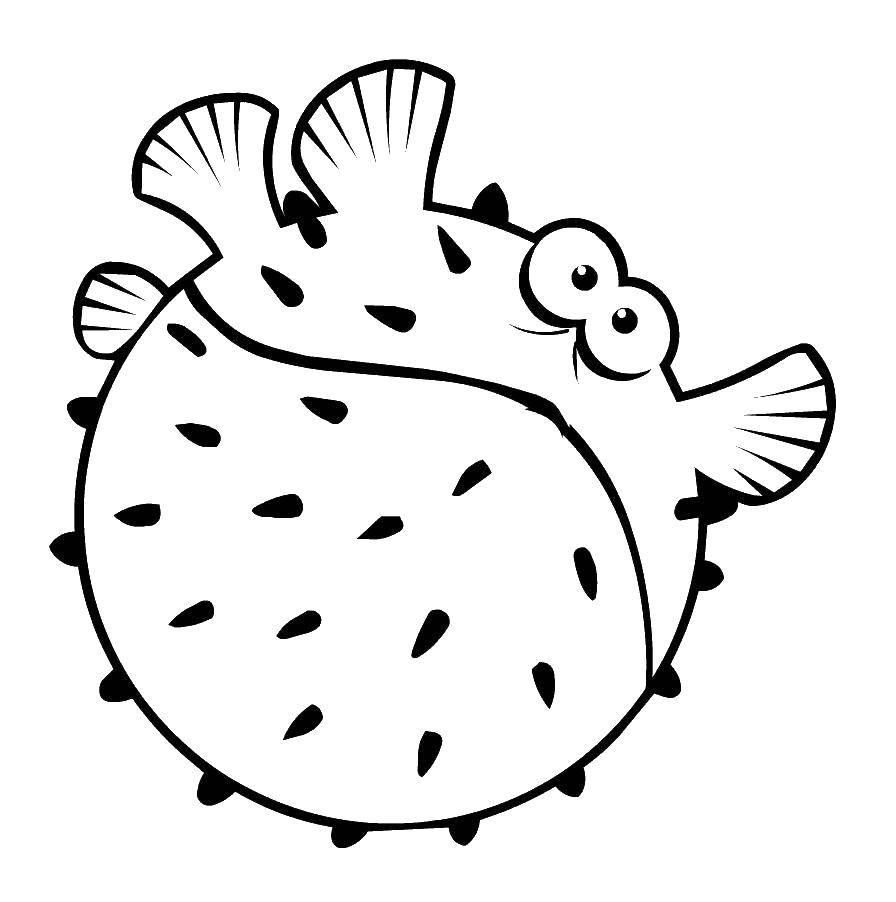 Морской ёж раздулся