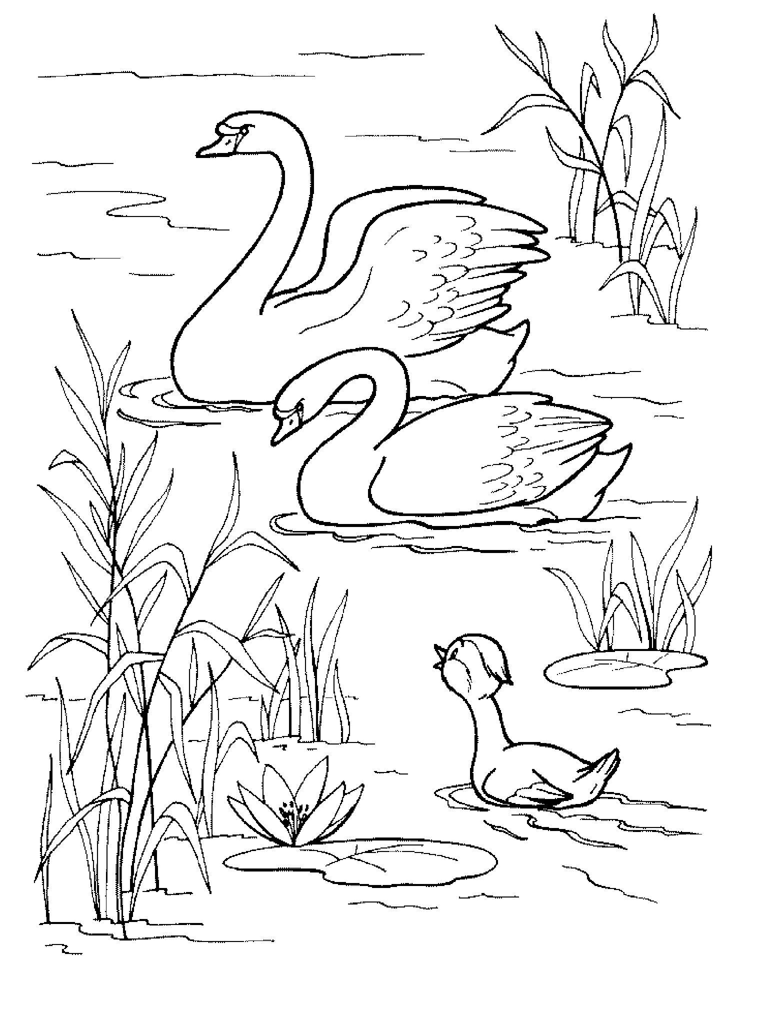 Пруд лебеди и утки