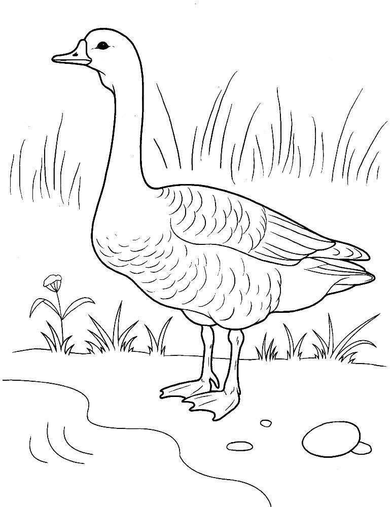 Раскраска с гусями  Раскраска гусь. раскраска разукрашка гуся, гуси лебеди, разукрашка детская с домашними животными