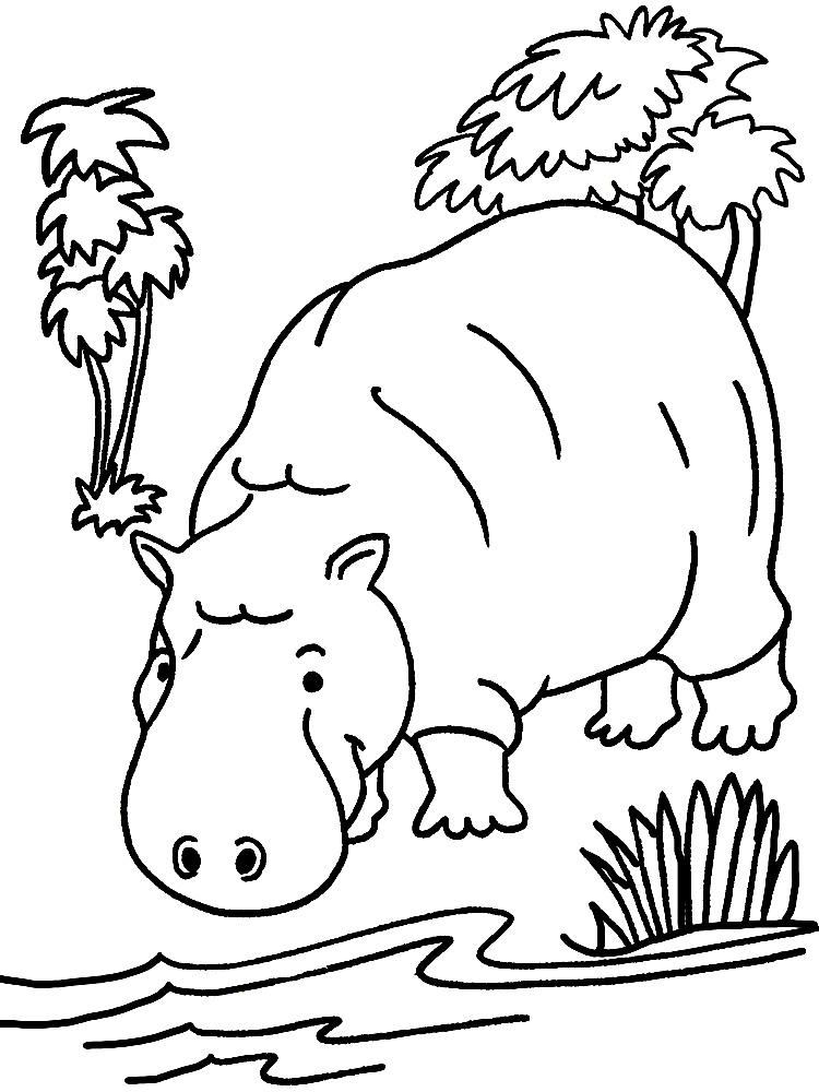 Раскраски бегемоты и гиппопотамы   Животные раскраски для малышей, бегемот у воды