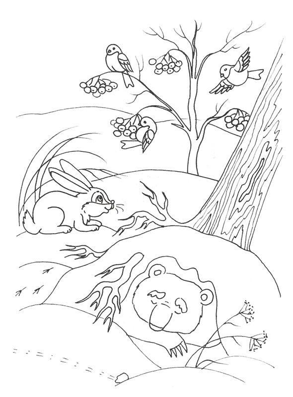 Раскраски зайцы, зайчиха, зайчонок  Мишка спит в берлоге, заяц, птицы на рябине