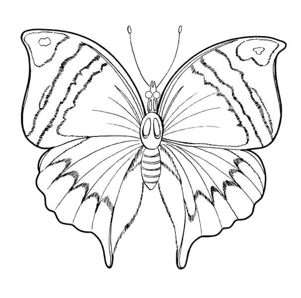 Раскраски муравьи с бабочками