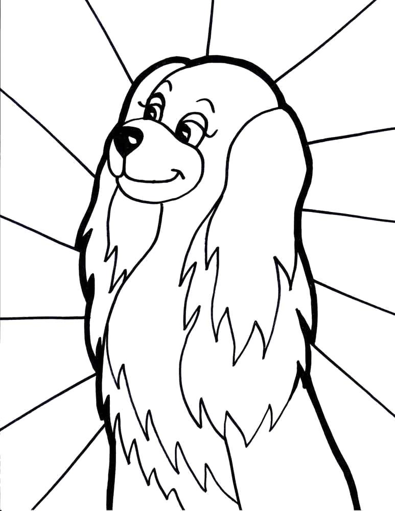 Ушастая собака