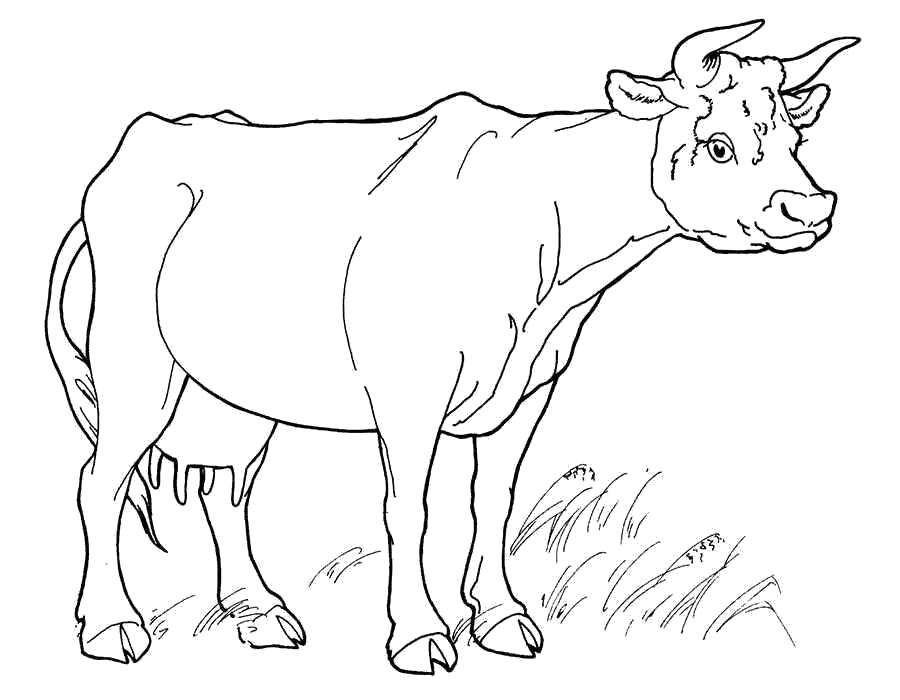 Раскраски молока, Раскраска Коробка молока раскраски. | 700x900