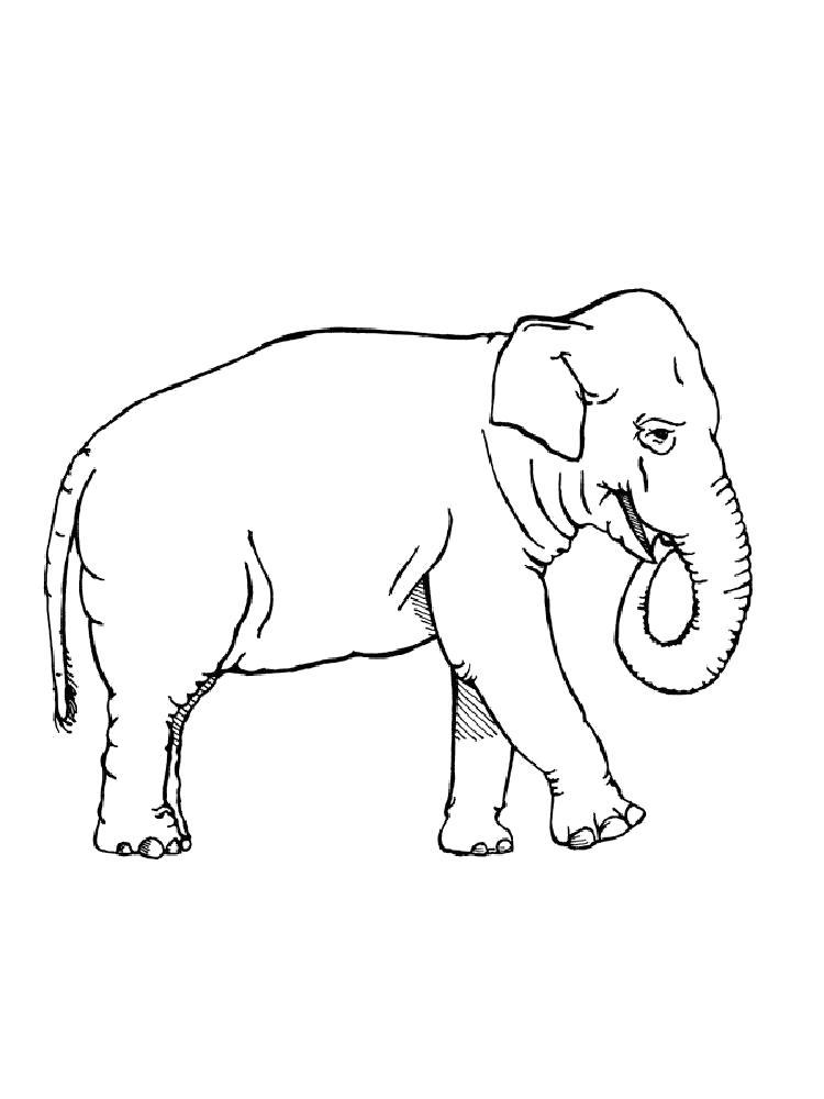 Раскраска слон