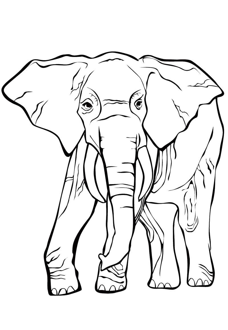 Слон с длинным хоботом