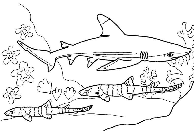 sбелая акула плавает в стае