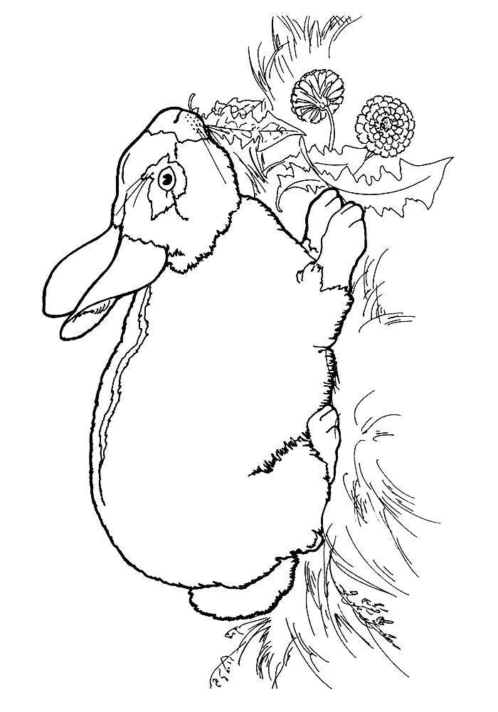 Раскраски зайцы, зайчиха, зайчонок  заяц ест траву