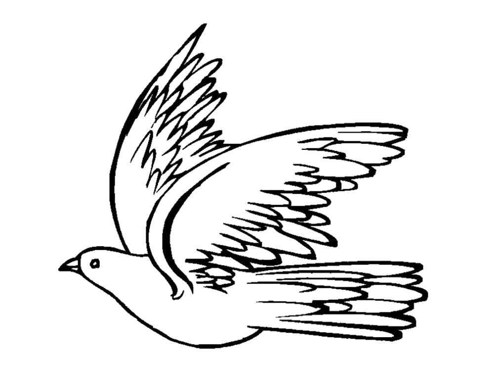Раскраски птицей