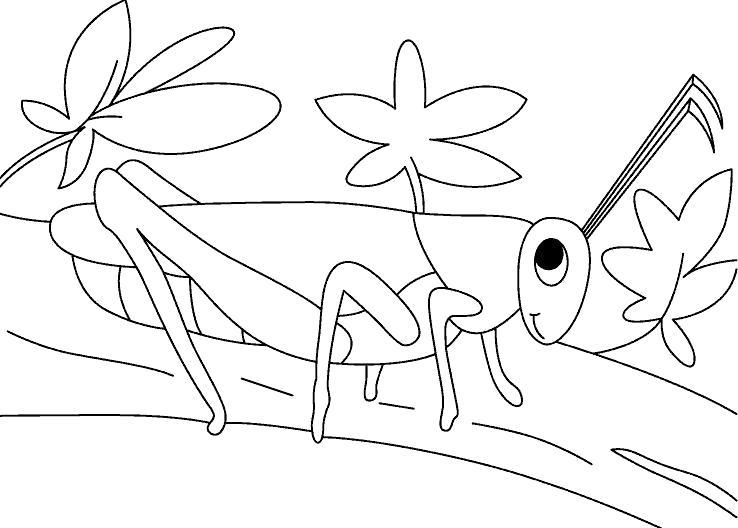 кузнечик сидит на ветке дерева