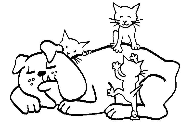 Котята на бульдоге