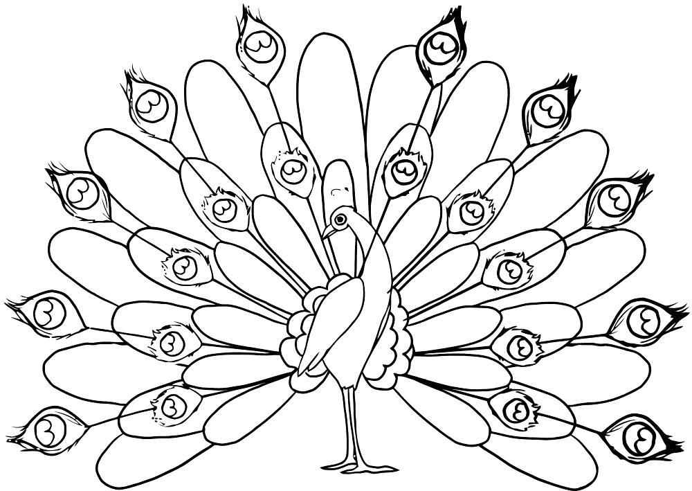 Раскраски домашние птицы павлин, птицы зоопарка павлины  Павлин гордый, красивый павлин, Павлин распушил перья