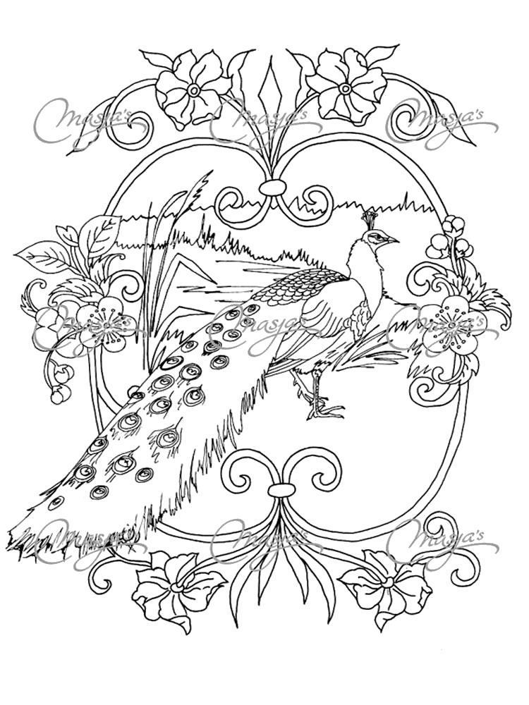 Раскраски домашние птицы павлин, птицы зоопарка павлины  Раскраска павлин