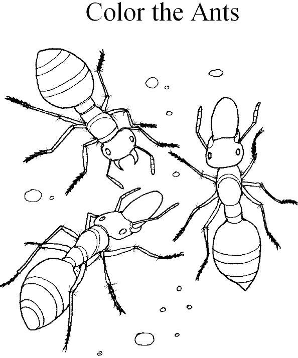 раскрась муравьев