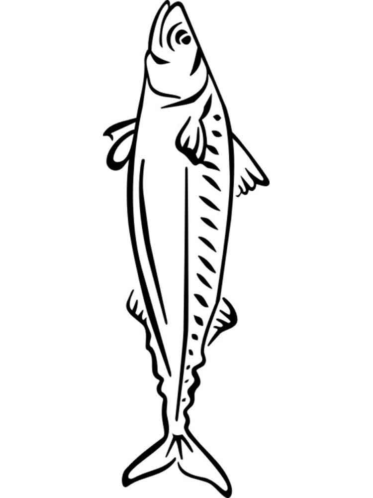 Раскраски с рыбой скумбрия