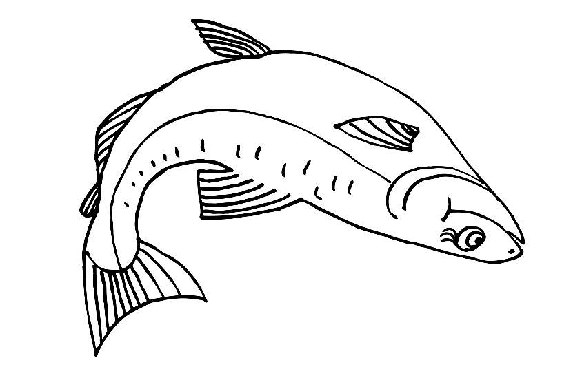 лосос  Раскраски с рыбой лосось