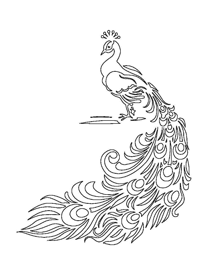 Раскраски домашние птицы павлин, птицы зоопарка павлины  Павлин с красивым хвостом