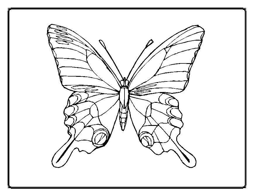 Красивые крылья бабочки