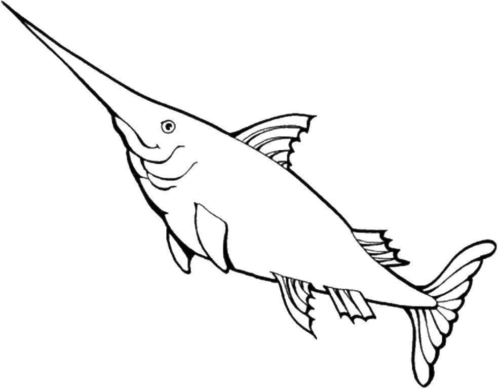 меч  Рыба меч плавает